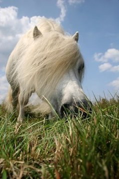 Green Grass: Approach with Caution - TheHorse.com | Horse Care | Scoop.it