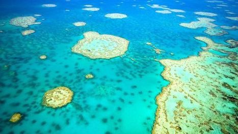 Robots find Barrier Reef coral at extreme depths, amazing ocean ... | GBR Geography | Scoop.it
