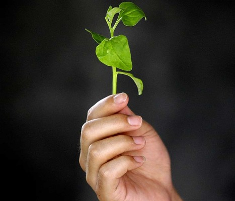 Super spinach not the only food which will make you stronger | Healthy Whole Foods | Scoop.it