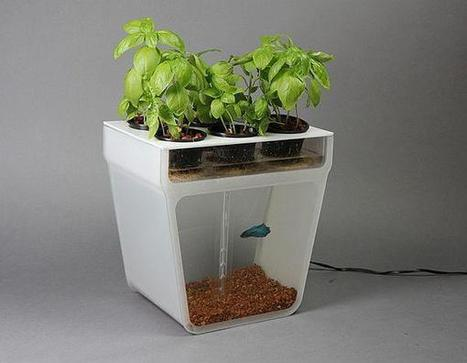 The Aquaponics Garden: An elegant table-top fish tank that cleans itself & grows fresh food at the same time | Tilapia et jardin | Scoop.it