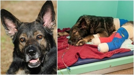 Last Ride Planned for K9 Injured in 2011 Car Wreck | Georgia Injury law News | Scoop.it
