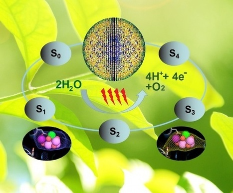 Scientists Take First Pictures of Photosynthesis in Action | leapmind | Scoop.it