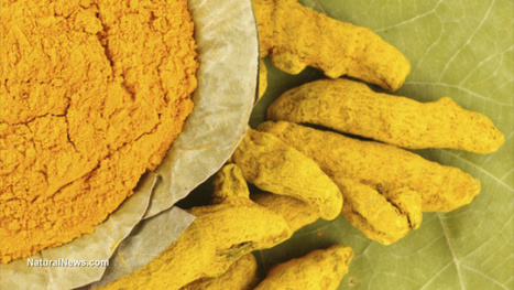 Turmeric shown to protect brain against fluoride poisoning | Heal the world | Scoop.it