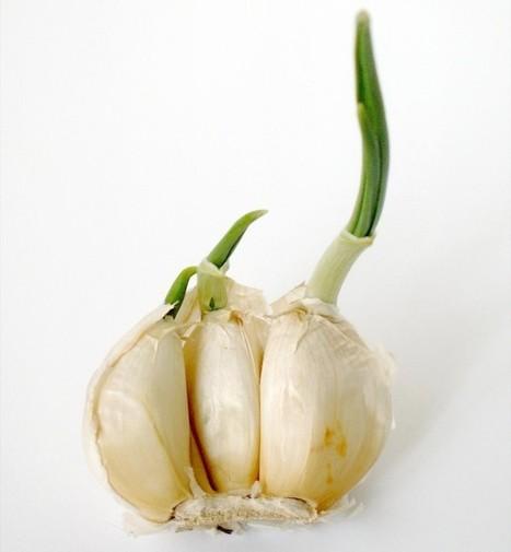 Duplamente sustentável  15 Alimentos que você compra uma vez e replanta para sempre ⇢ | Mixordia de  temáticas | Scoop.it