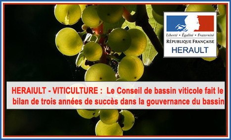 Bilan de la production viticole du Languedoc Roussillon | Le Vin et + encore | Scoop.it