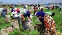 (Monde) Controverses européennes de Marciac : L'agribusiness survivra-t-il à la fin des paysans ? | Chimie verte et agroécologie | Scoop.it