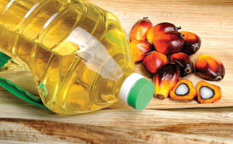 From tiny seeds - How L'Oreal is tracing palm oil in its supply chain | Sustainable Procurement News | Scoop.it