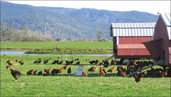 The End of Pastured Food? | Food issues | Scoop.it