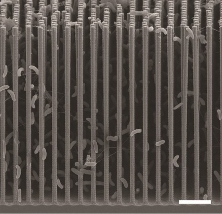 Artificial photosynthesis breakthrough turns CO2 emissions into plastics and biofuel | Sustainable Futures | Scoop.it