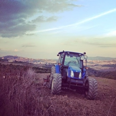"""Discovering Umbria: 2014 Extra virgin olive oil: """"you need to make to do with what you have"""" 