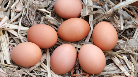 10 of the Best Egg Laying Chickens and Hens | Farming and the Countryside | Scoop.it