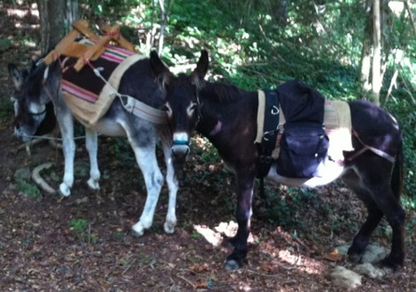 The Beautiful Donkeys of Forestcamp - Smerillo | Hideaway Le Marche | Scoop.it