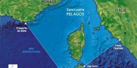 Méditerranée : le sanctuaire Pelagos dans le collimateur - Midi Libre   Les AMP en Méditerranée   Scoop.it