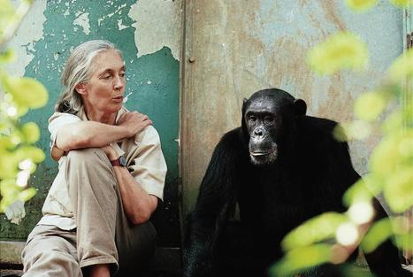 Jane Goodall Abstract | Jane Goodall | Scoop.it
