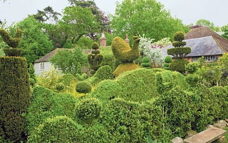 Topiary: it's the shape of things to come  - Telegraph   Annie Haven   Haven Brand   Scoop.it