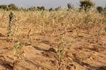 FAO : l'Afrique discute de la création d'un fonds pour la sécurité alimentaire | Child Protection and food security in Chad | Scoop.it