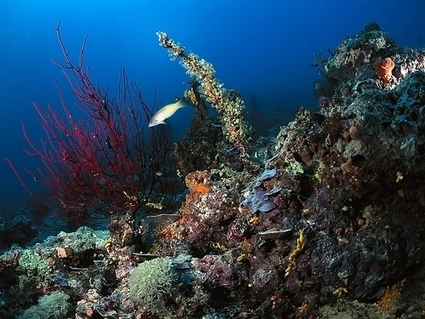 The Donors Behind a Major New Coral Reef Initiative - Inside Philanthropy - Inside Philanthropy | philanthropy | Scoop.it