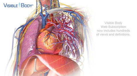 Visible Body | 3D Human Anatomy | Docentes y TIC (Teachers and ICT) | Scoop.it