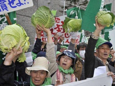 [Photo] La révolte des choux | TV5MONDE | Japon : séisme, tsunami & conséquences | Scoop.it