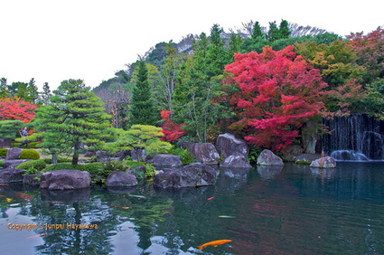 Ponds in Japanese gardens. Second to the... | Views of Japan | Japanese Gardens | Scoop.it