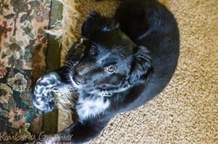 Dog Training Tip | Save Your Carpet, Potty Training a New Puppy | Dog Training - Mark Mendoza | Scoop.it