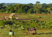 Madagascar : Entre 200.000 et 350.000 personnes touchées par la famine dans le Grand Sud   Daraja.net   Scoop.it