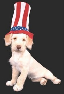 Fourth of July dog safety tips | Food for Pets | Scoop.it