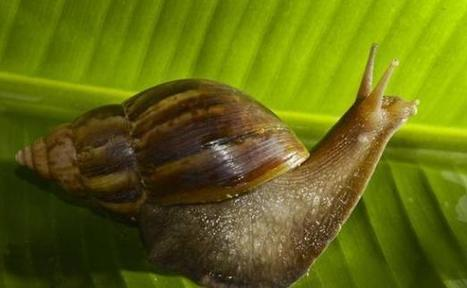 Des escargots très au courant   Biodiversité & RSE   GreenPeople   Scoop.it
