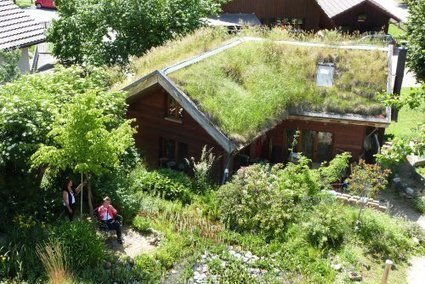 Ecological and natural green roofs : Extensive green roofs as protected habitat for endangered species   Positivisme ambiental   Scoop.it