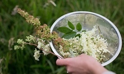 Foraging shouldn't be forbidden – it's healthy, sustainable and local | Sara Brouillette | Wild food | Scoop.it