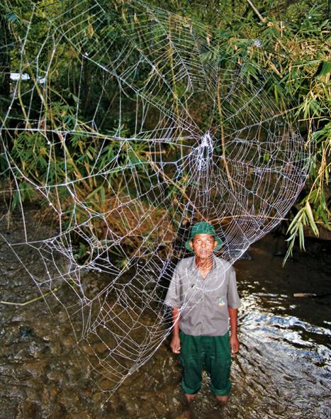 Voilà à quoi ressemblent des toiles d'araignée XXL | De Natura Rerum | Scoop.it