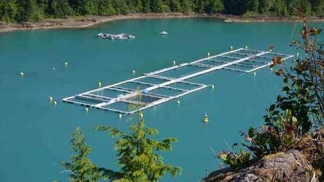 Anouncing the Aquaculture in Canada Initiative | Aquaculture | Scoop.it