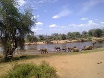 A View of Elephants on the Samburu National Reserve via Google Maps | The Jett Journal | Scoop.it