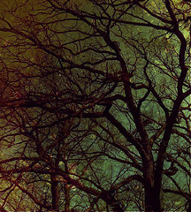 Entanglement and its Antidote,Detachment | skillful means for conscious living | Scoop.it