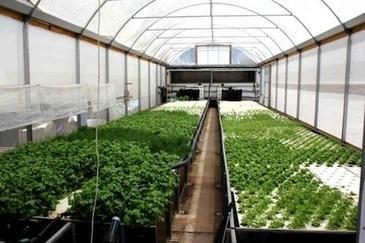 Urban-based Aquaponics to grow in Australian food industry in 2013 ...   Wellington Aquaponics   Scoop.it