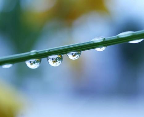 Cinq procédés insolites pour épurer les eaux usées   L'Economie Circulaire en développement   Scoop.it