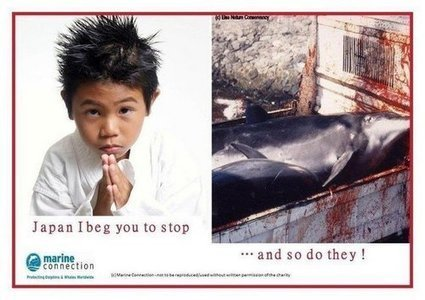 Send a Fax For the Dolphins of Taiji | Dolphins | Scoop.it