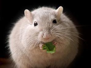 Direct link between obesity and pancreatic cancer | Pancreatic cancer | Scoop.it