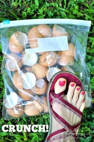 Organic Gardening: Use Egg Shells to Deter Slugs and Snails | Gardening | Scoop.it