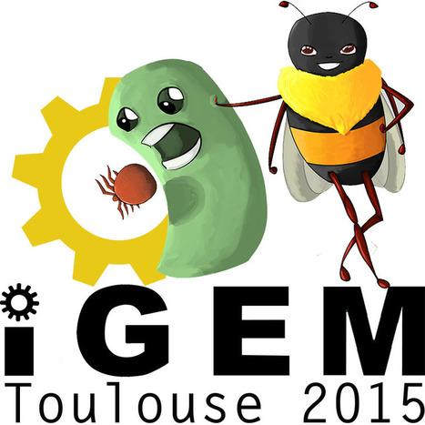 Université Toulouse III - Paul Sabatier - Médaille d'or pour le projet ApiColi à la compétition iGEM 2015 | Technologie, Pédagogie & Education | Scoop.it