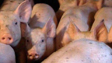 L'agriculture auvergnate touchée par l'embargo russe - France 3 Auvergne   Le Fil @gricole   Scoop.it