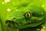 SNAKE ATTACK AT 175 MPH! | Strange days indeed... | Scoop.it