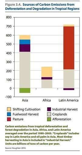 Natural Capital: Palm Oil and Deforestation | Crop Evolution, Domestication, and Biodiversity | Scoop.it