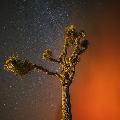 Photography by Stuart Palley | Arts & Creators - Des Arts et des Créateurs | Scoop.it
