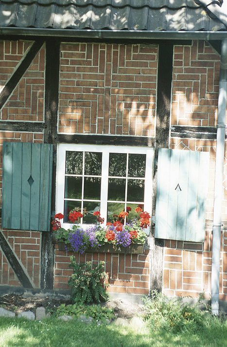 Tips on Overwintering Geraniums | The Miracle of Fall | Scoop.it