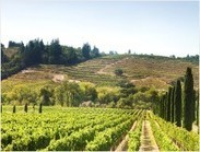 Californian wines: China's latest crush? | Vitabella Wine Daily Gossip | Scoop.it