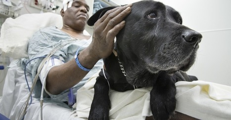 Can the Internet Help a Blind Man Keep the Dog That Saved His Life? | miscellaneous | Scoop.it
