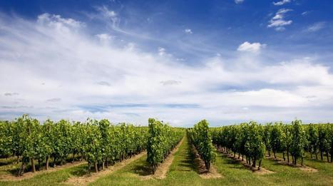 Sera-t-il bientôt impossible de produire du vin en France ? | Oenotourisme en Entre-deux-Mers | Scoop.it