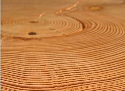 Pine Trees Help Reconstruct a Long-Ago Drought | Sustainable Futures | Scoop.it