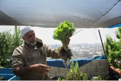 Hydroponic Farms Sustain Urban Gazans | Green Prophet | Renewable Energy Cyprus | Scoop.it